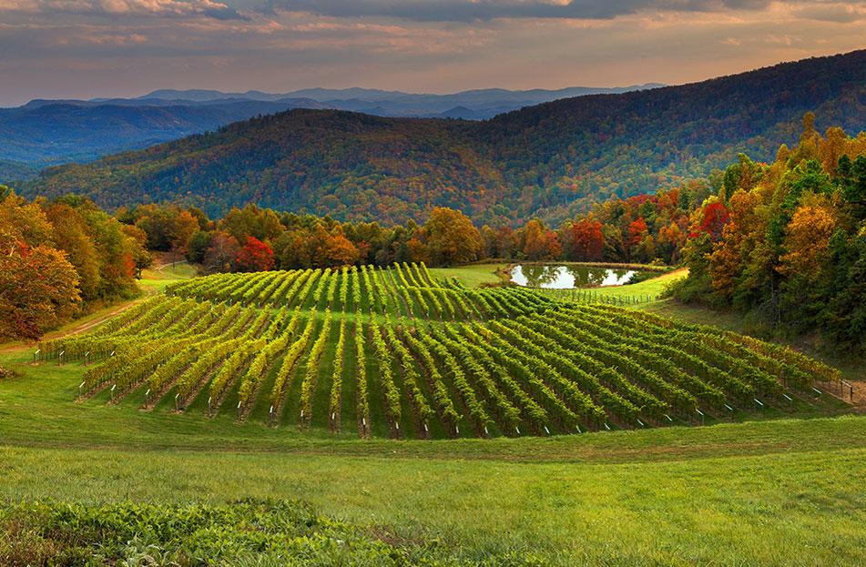 Birntshirt Vineyards
